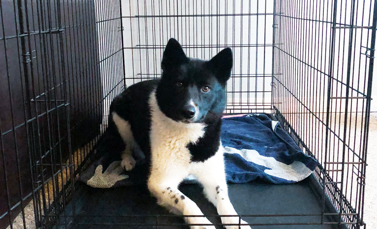 Top 3 Do's and Don'ts of Crate Training