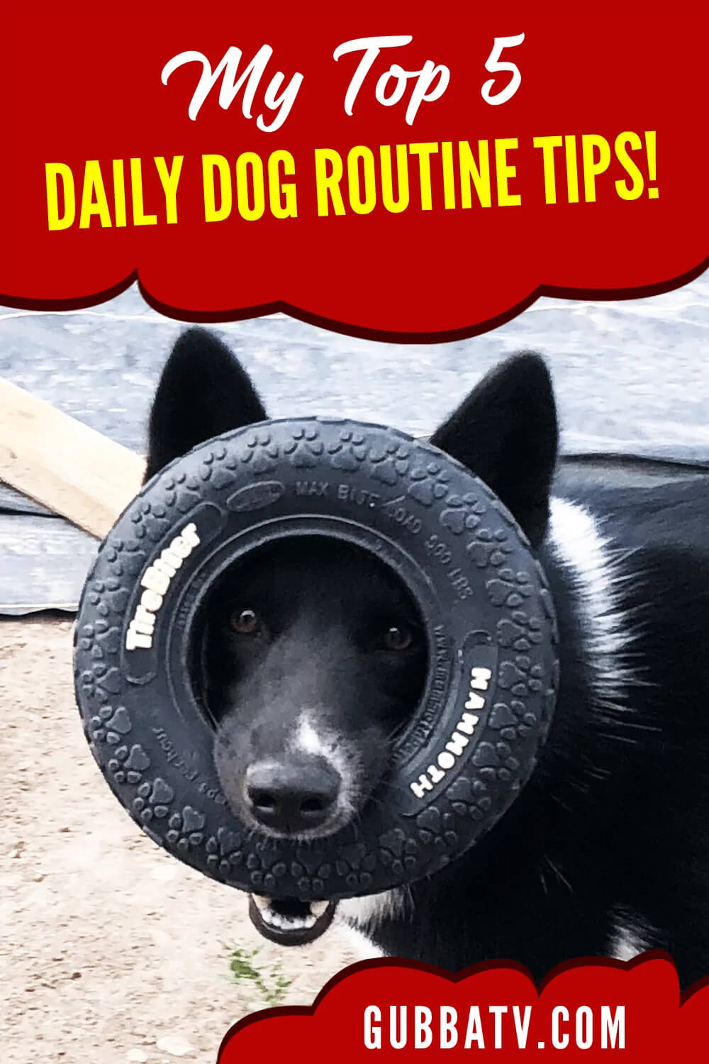 Top 5 Daily Dog Routine Tips!