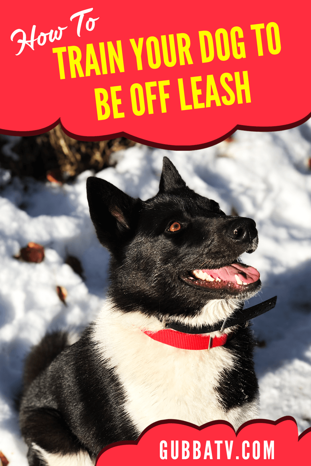How To Train Your Dog To Be Off Leash