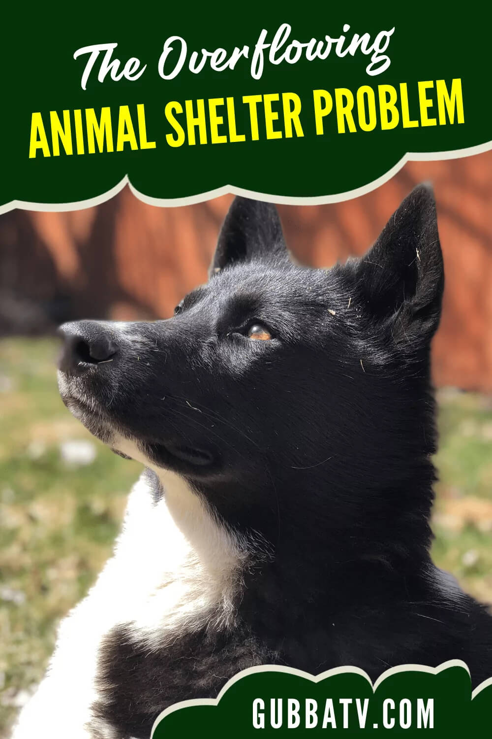 The Overflowing Animal Shelter Problem