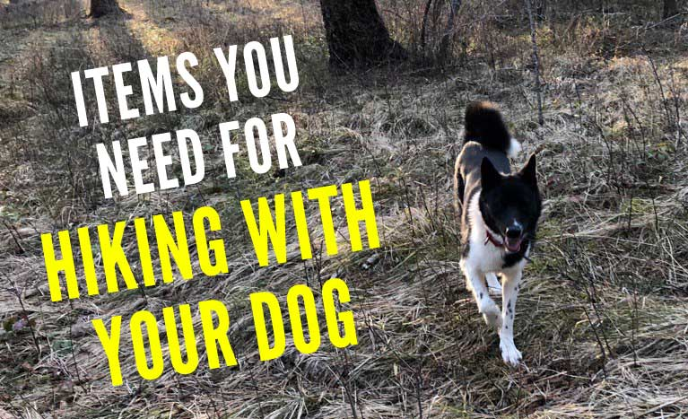 Items You Need For Hiking With Your Dog